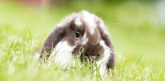 Zapewnienie dobrego domu królikowi
