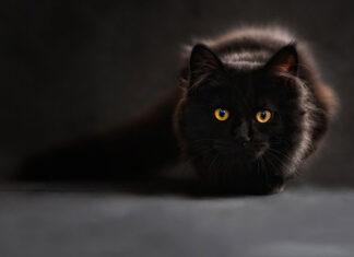 Co robić, żeby kot nie drapał mebli