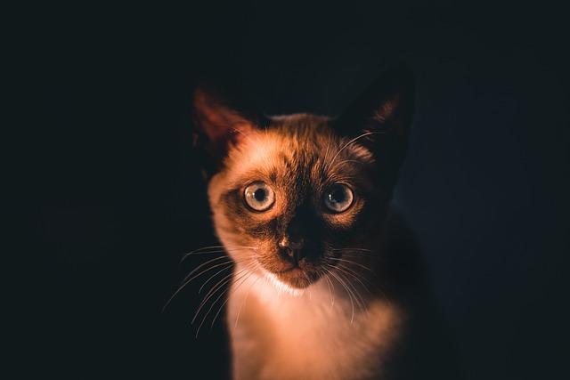 Jaką karmę wybrać dla kotów